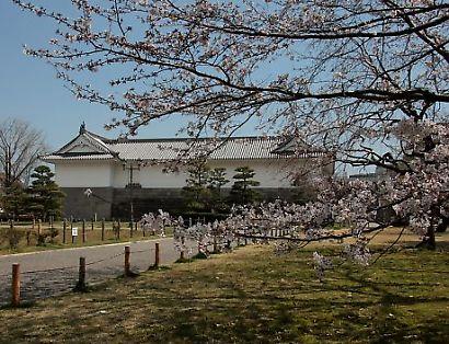 駿府公園の桜-3