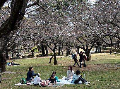 駿府公園の桜-5