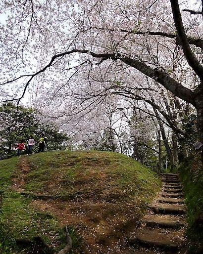 谷津山の桜-1
