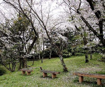 谷津山の桜-2