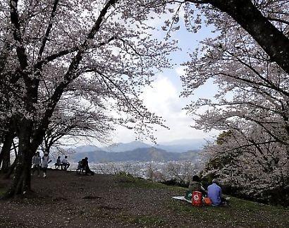 谷津山の桜-3