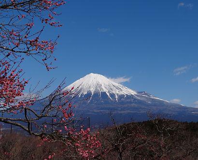 梅の岩本山-5