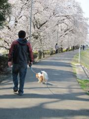 東雲お花見散歩
