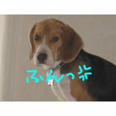 hun_20071226101301.jpg