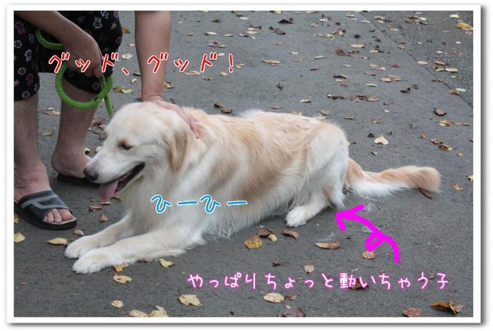 nLoo_.jpg
