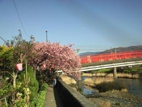 河津赤い橋