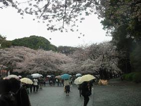 上野公園1