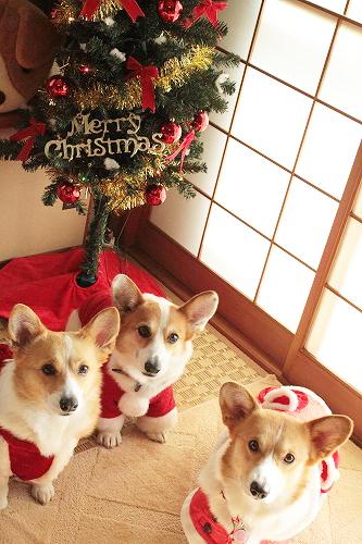 メリ~クリスマスショット☆
