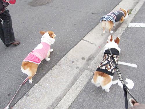 みんなでお散歩~