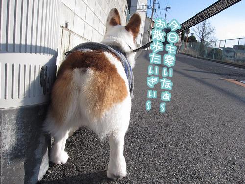 お散歩たいぎぃ~