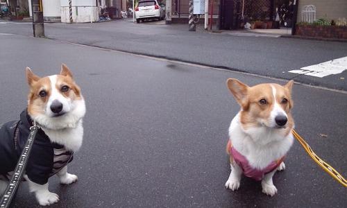 一緒にお散歩~