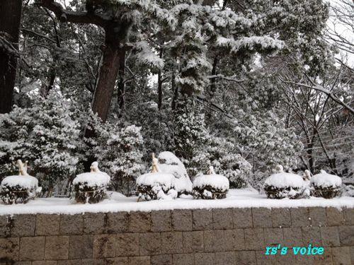 snow_20120126002437.jpg