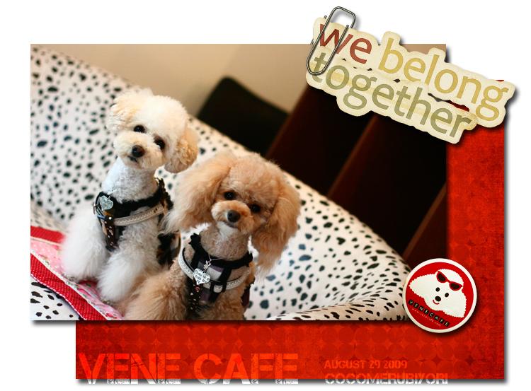 VENE-CAFE-ココメル