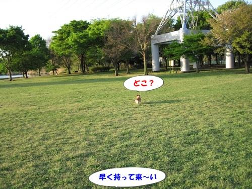 IMG_4223.jpg
