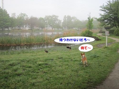 IMG_4398_20110505071305.jpg