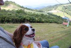 茶臼山2 5%
