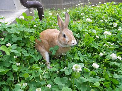 菅さんへ ウサギ