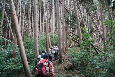 尾根道植林は台風の跡
