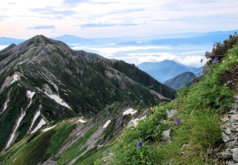 蓮華岳とミヤマオダマキ