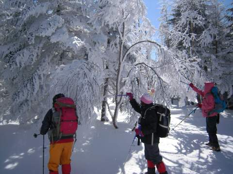樹氷と遊ぶ