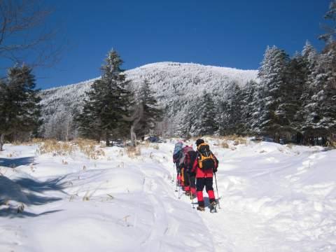 縞枯山の雪原