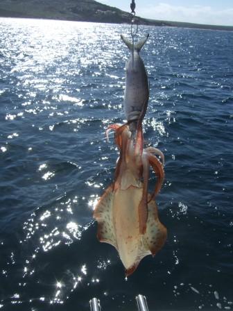 got a good catch