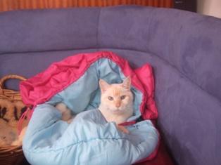 momo in the sleeping bag