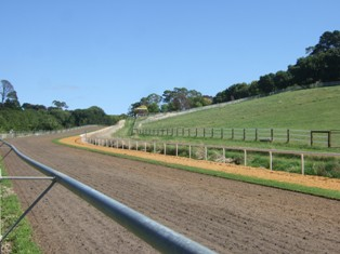 racing horse training course2