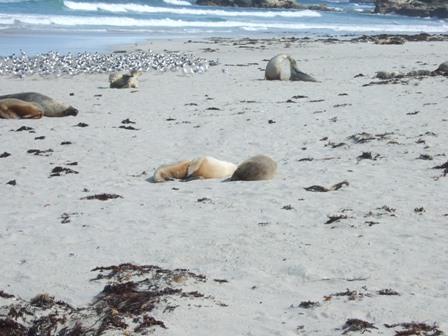 more seals4