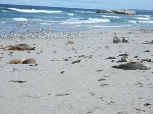 more seals3