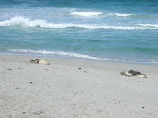 more seals2