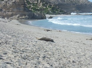 more seals