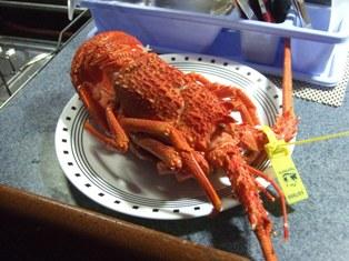 tasmanian lobster