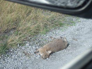 more road kill