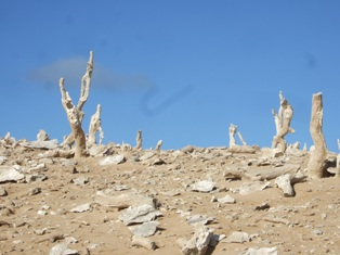 calcified forest3