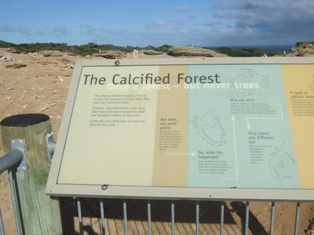 calcified forest signage