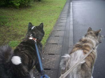 2匹散歩2