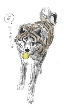 ふぶテニスボール