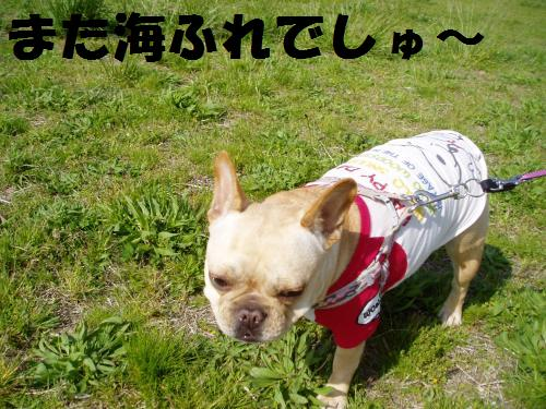 001_convert_20110506225117.jpg