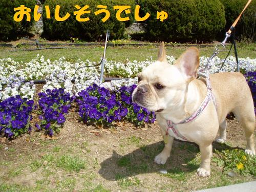002_convert_20110415000600.jpg