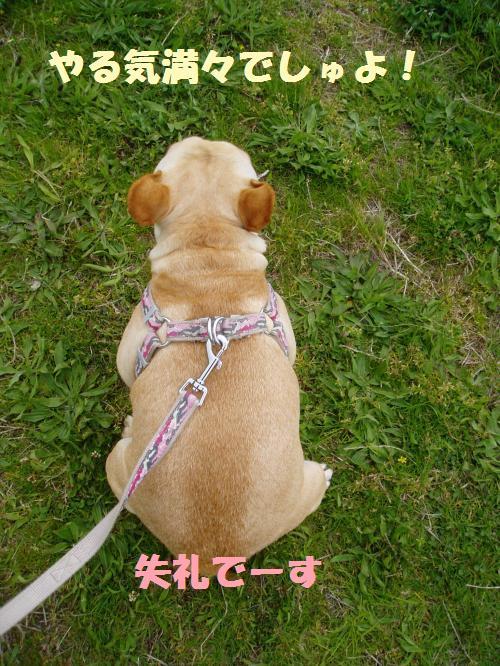 003_convert_20110501031742.jpg
