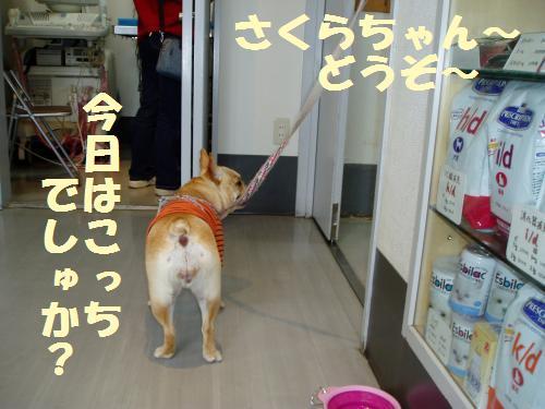 004_convert_20110426234838.jpg