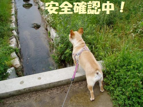 004_convert_20110512234911.jpg