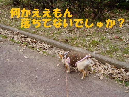 005_convert_20110405005401.jpg
