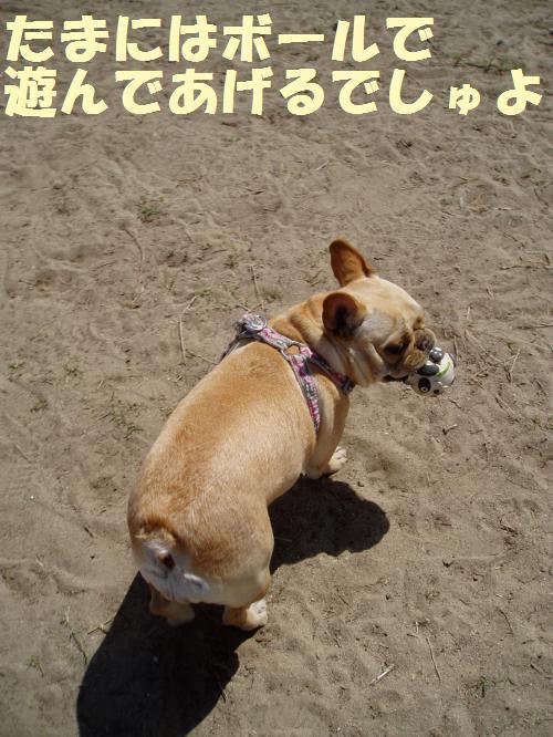 007_convert_20110508041215.jpg