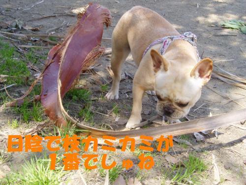 008_convert_20110401152010.jpg