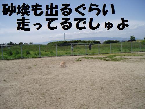 009_convert_20110508041240.jpg