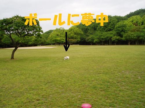 009_convert_20110512014618.jpg