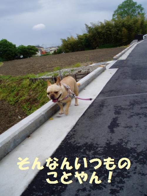 009_convert_20110512235219.jpg