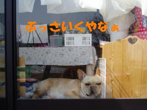 010_convert_20110401152134.jpg